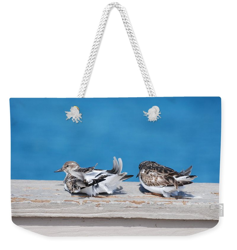 Bird Weekender Tote Bag featuring the photograph Cold Birds by Rob Hans