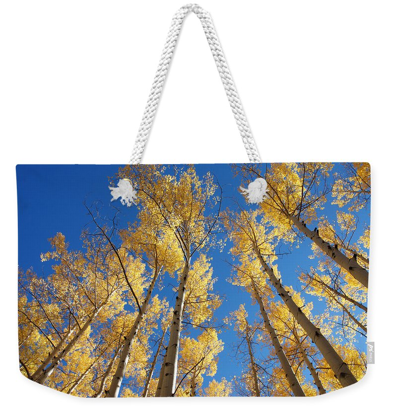 Aspen Weekender Tote Bag featuring the photograph Colorado Aspen by Jerry McElroy