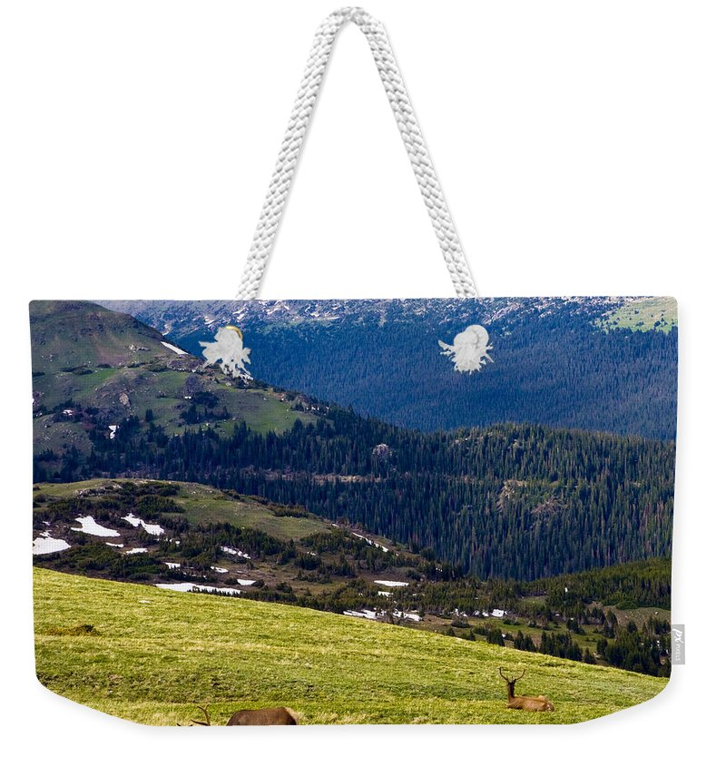 Americana Weekender Tote Bag featuring the photograph Colorado Elk by Marilyn Hunt