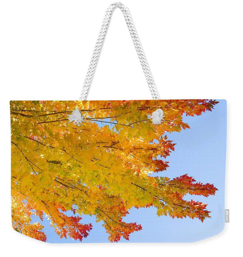 Branches Weekender Tote Bag featuring the photograph Colorful Autumn Reaching Out by James BO Insogna