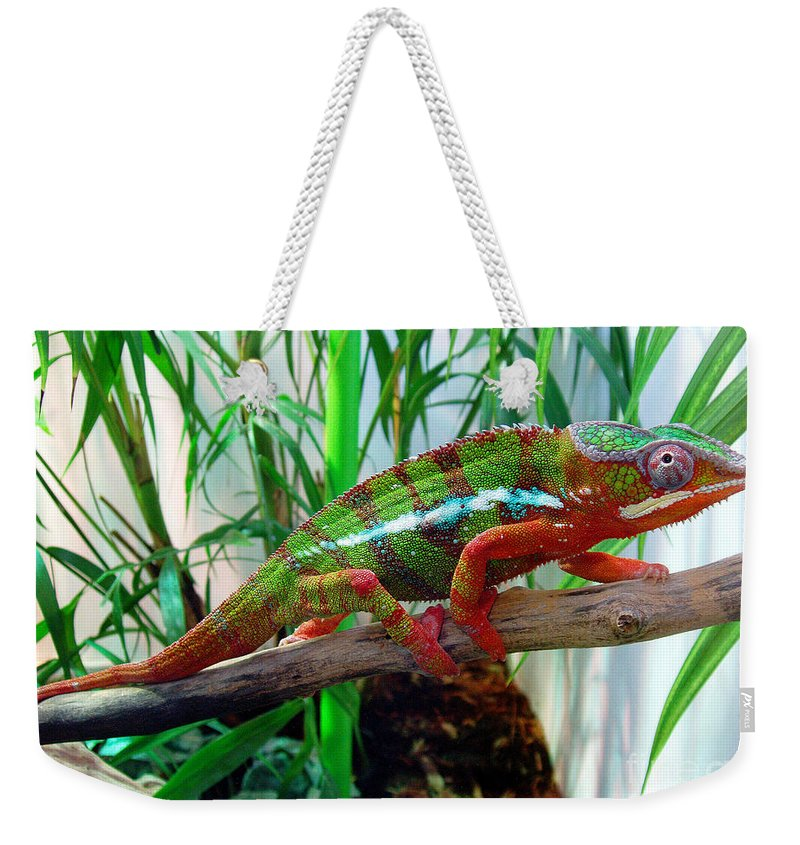Chameleon Weekender Tote Bag featuring the photograph Colorful Chameleon by Nancy Mueller