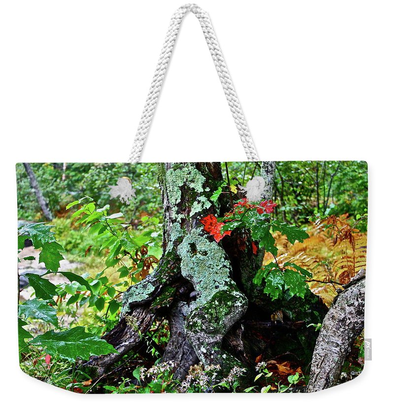 Tree Weekender Tote Bag featuring the photograph Colorful Stump by Diana Hatcher