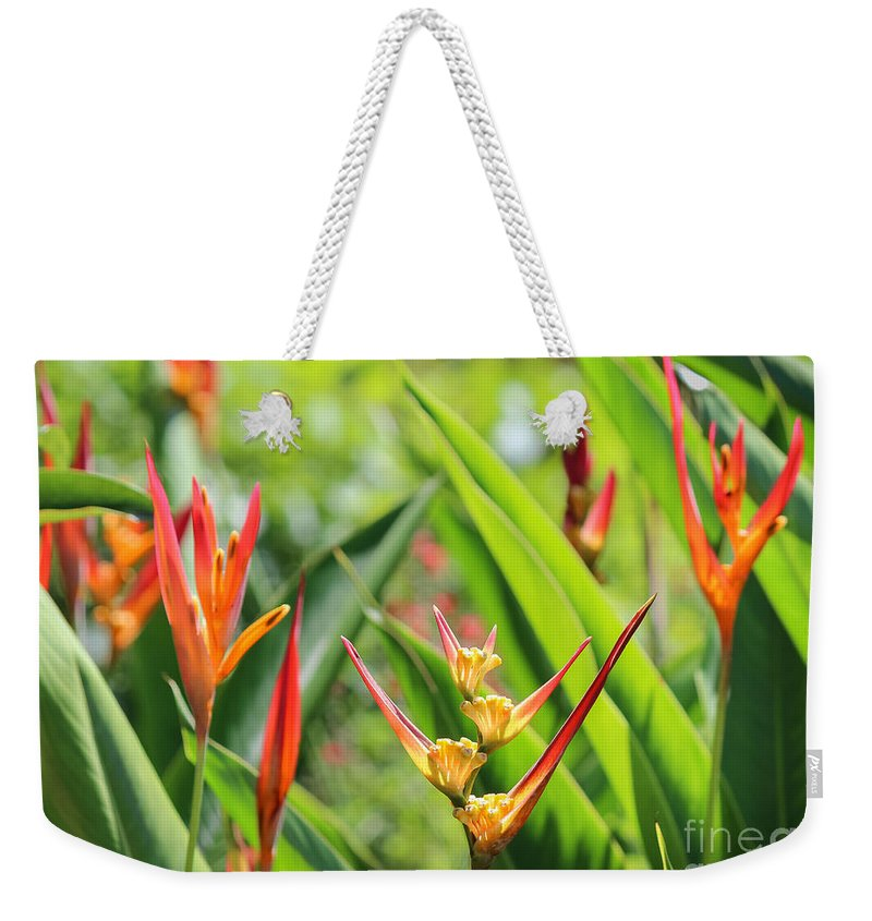 Arnold's Butterfly Garden Weekender Tote Bag featuring the photograph Colors Of The Tropics by Liesl Walsh