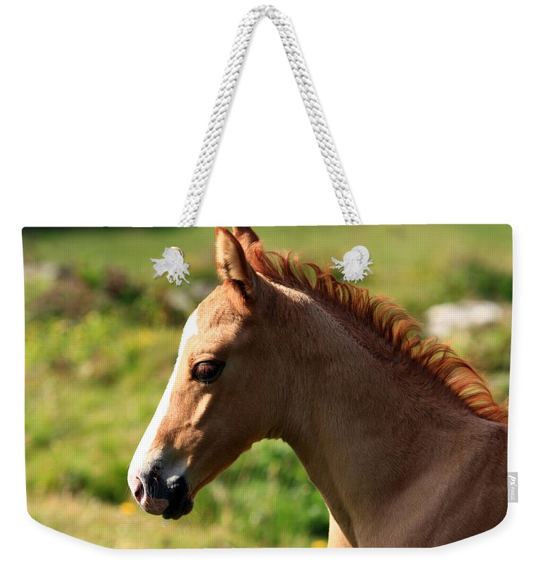 Horse Weekender Tote Bag featuring the photograph Colt Portrait by Aidan Moran