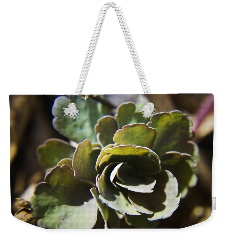 Aquilegia Weekender Tote Bag featuring the photograph Columbine Foliage by Teresa Mucha
