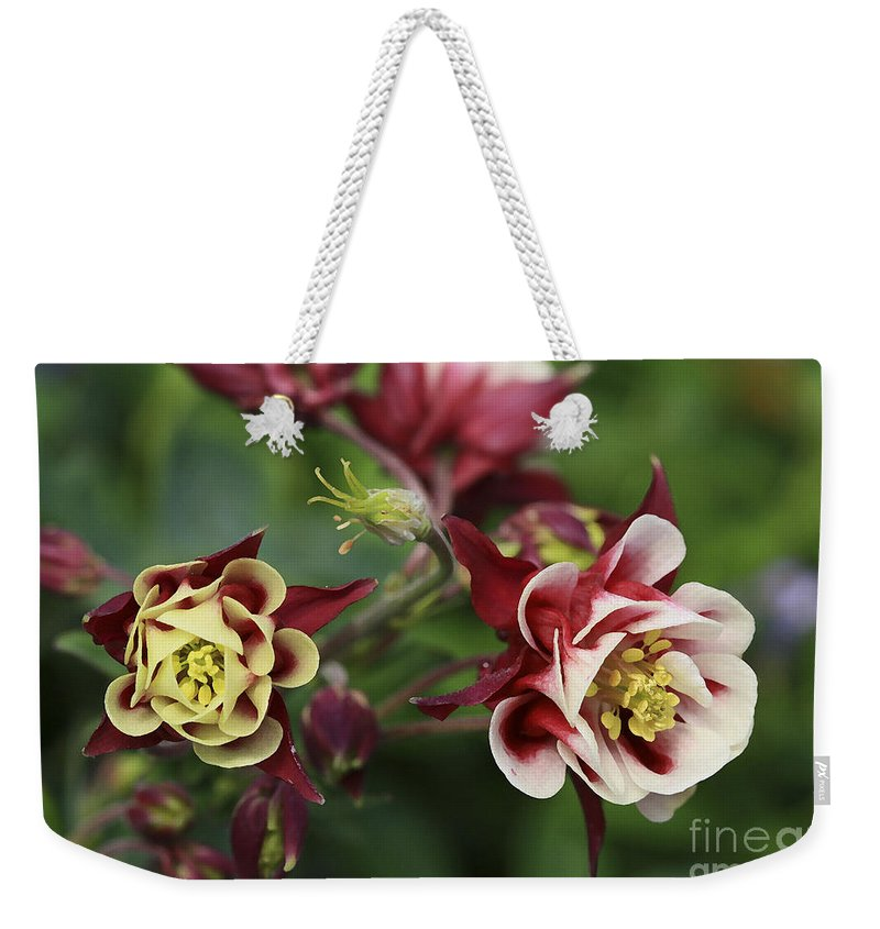 Flowers Weekender Tote Bag featuring the photograph Columbine In Spring by Deborah Benoit