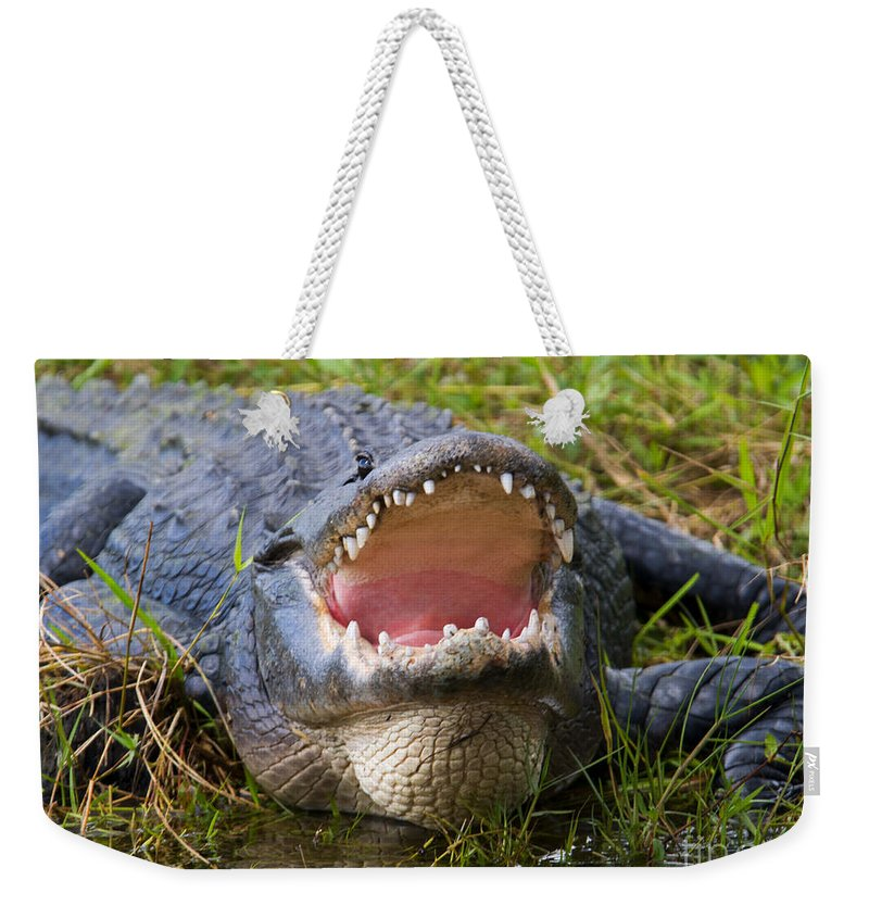 Alligator Weekender Tote Bag featuring the photograph Come A Bit Closer by Mike Dawson