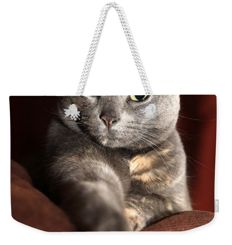 Kitty Weekender Tote Bag featuring the photograph Come Here by Amanda Barcon