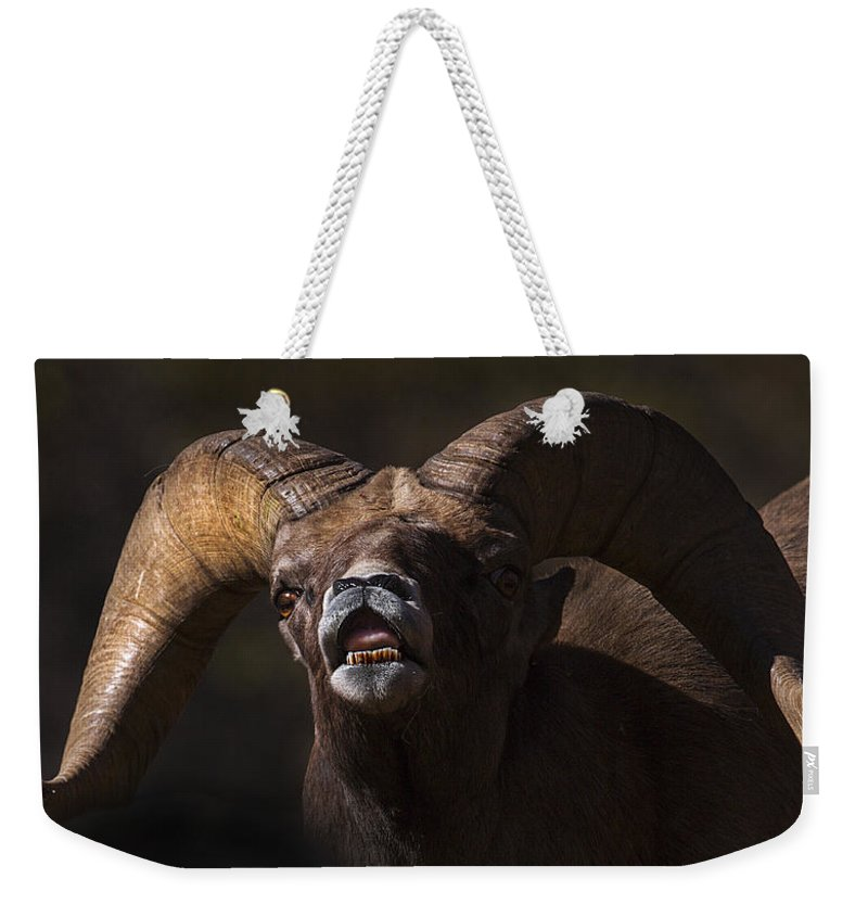 Big Horn Weekender Tote Bag featuring the photograph Comin At You by Jeff Shumaker