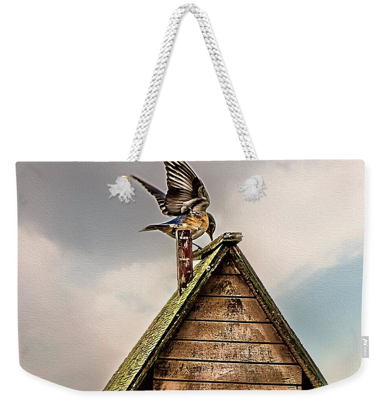 Eastern Bluebird Weekender Tote Bag featuring the photograph Coming Home by Cynthia Wolfe