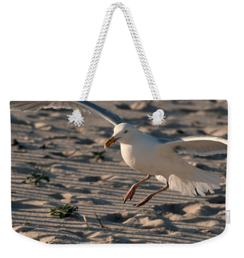 Jersey Shore Weekender Tote Bag featuring the photograph Coming In For A Landing - Jersey Shore by Angie Tirado