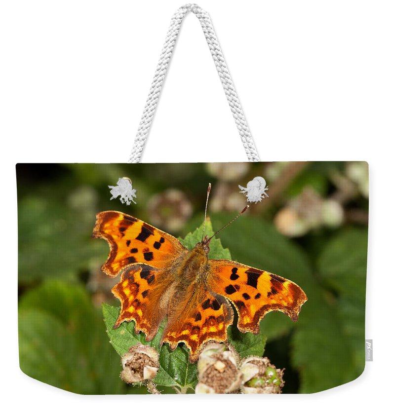Comma Weekender Tote Bag featuring the photograph Comma Butterfly by Bob Kemp