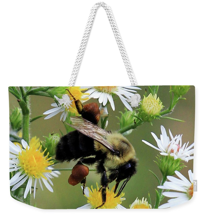 Common Eastern Bumblebee Weekender Tote Bag featuring the photograph Common Eastern Bumblebee by Jennifer Robin