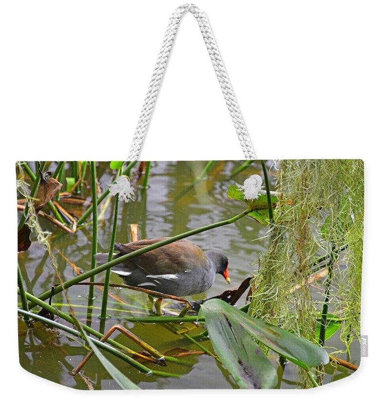 Animal Weekender Tote Bag featuring the photograph Common Moorhen by Deborah Good