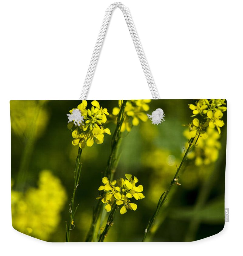 Flowers Weekender Tote Bag featuring the photograph Common Wintercress Flowers by Christina Rollo