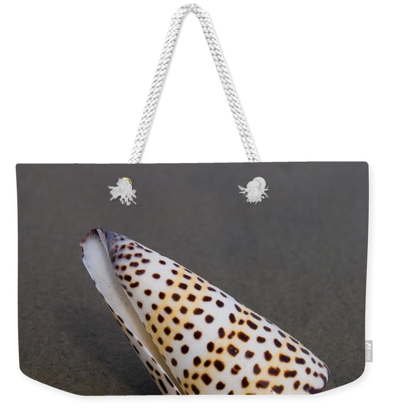 Cone Snail Weekender Tote Bag featuring the photograph Cone Seashell On The Beach by Anthony Totah