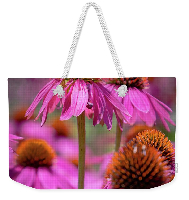 Coneflowers Weekender Tote Bag featuring the photograph Coneflowers by Pat Lucas