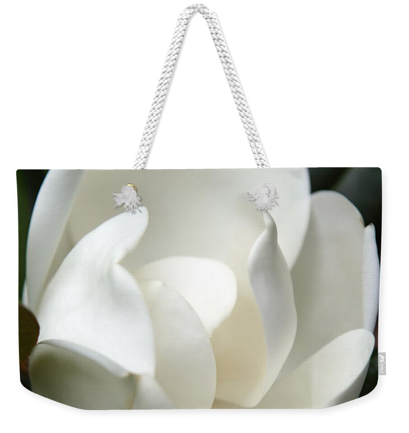 Magnolia Weekender Tote Bag featuring the photograph Container by Amanda Barcon