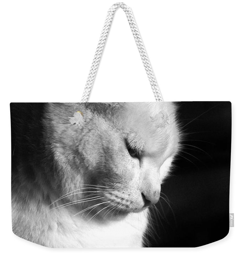 Nature Weekender Tote Bag featuring the photograph Contempation by Bob Orsillo