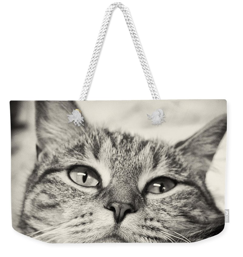 Cat Weekender Tote Bag featuring the photograph Content by Scott Wyatt