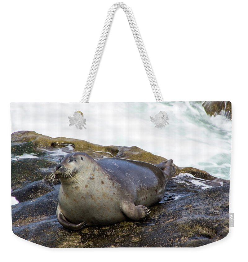 Seal Weekender Tote Bag featuring the photograph Contentment by Amy Sorvillo