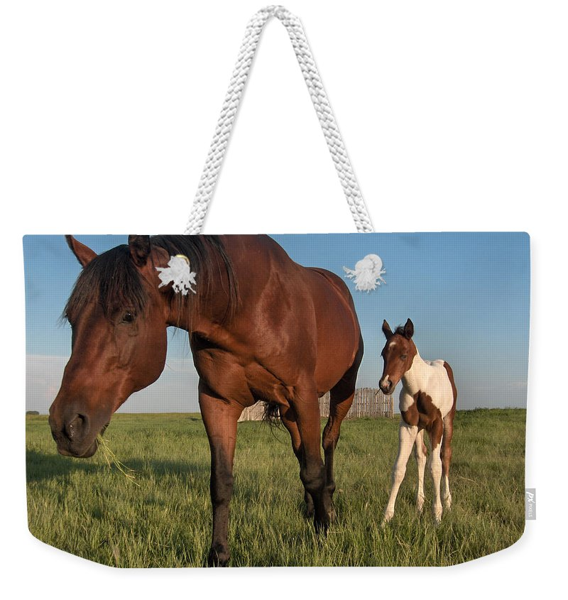 Horse Colt Baby Animals Herd Filly Ranch Farm Life Pasture Weekender Tote Bag featuring the photograph Contentment by Andrea Lawrence