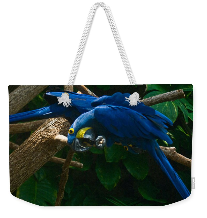 Contorted Weekender Tote Bag featuring the photograph Contorted Parrots by Douglas Barnett