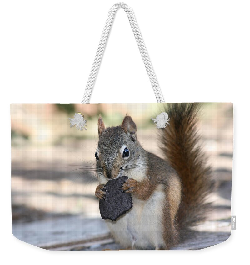 Cookie Squirrell Nature Wild Animal Chocolate Food Camping Outdoors Weekender Tote Bag featuring the photograph Cookie Monster by Andrea Lawrence