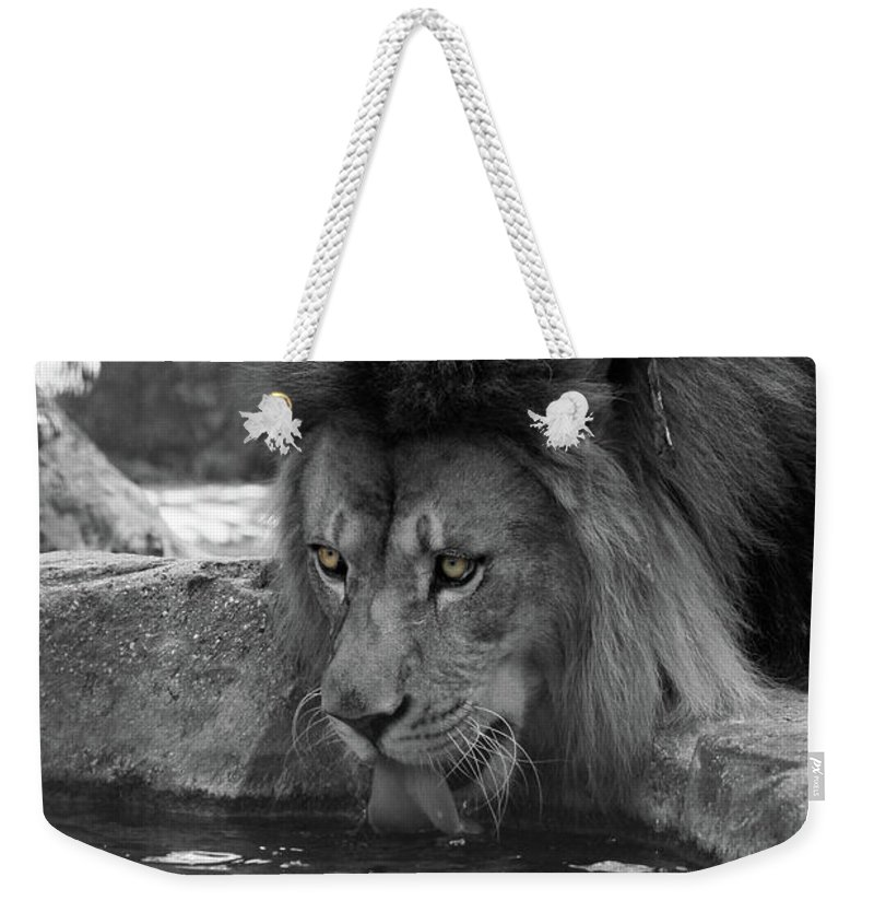Lion Weekender Tote Bag featuring the photograph Cool Drink Of Water Black And White T O C by Judy Whitton