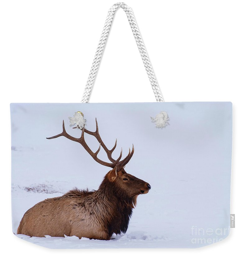 Elk Reservation Weekender Tote Bag featuring the photograph Cooling Off by Bob Phillips