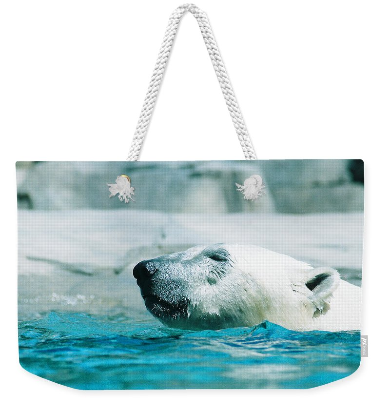 Polar Bear Weekender Tote Bag featuring the photograph Cooling Off by Steve Karol