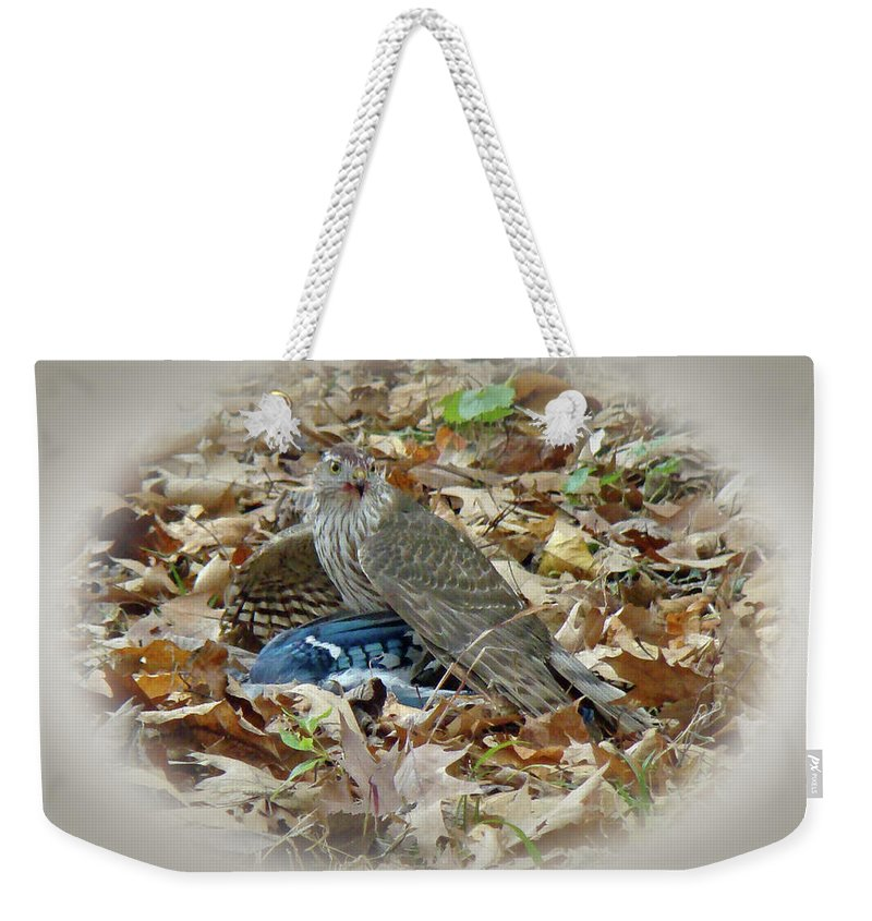 Hawk Weekender Tote Bag featuring the photograph Cooper's Hawk - Accipiter Cooperii - With Blue Jay by Mother Nature