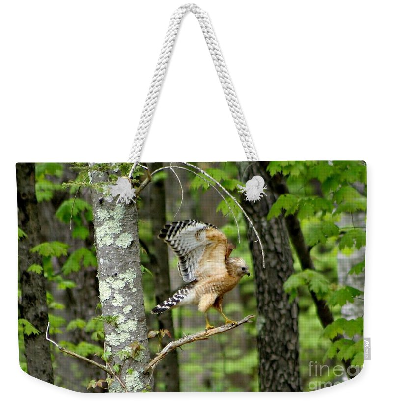 Bird Weekender Tote Bag featuring the photograph Coopers Hawk In New Hampshire by Barbara S Nickerson