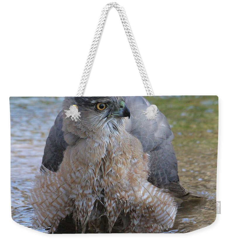 Cooper's Hawk Weekender Tote Bag featuring the photograph Cooper's Hawk In Stream by Doris Potter