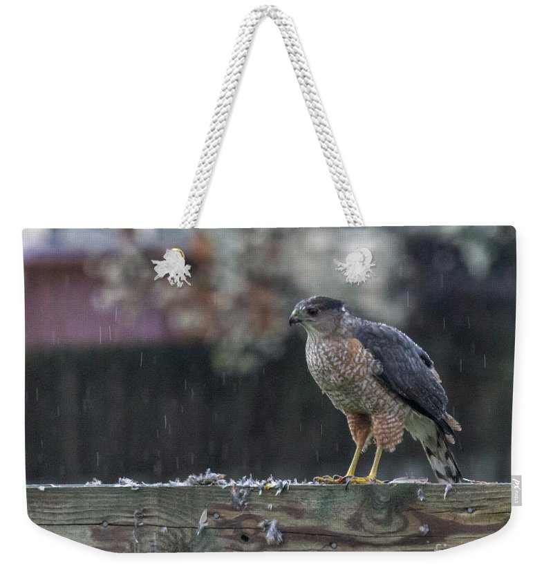 Hawk Weekender Tote Bag featuring the photograph Cooper's Hawk In The Rain by Jonathan Ryan
