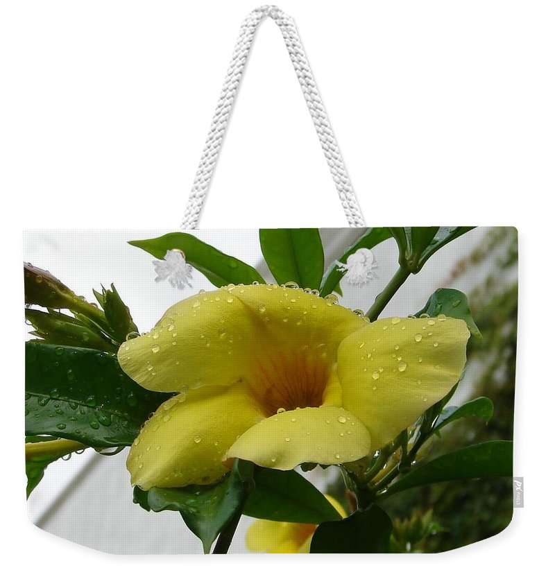 Yellow Water Drops Flower Green Leaves Weekender Tote Bag featuring the photograph Copa De Oro by Luciana Seymour