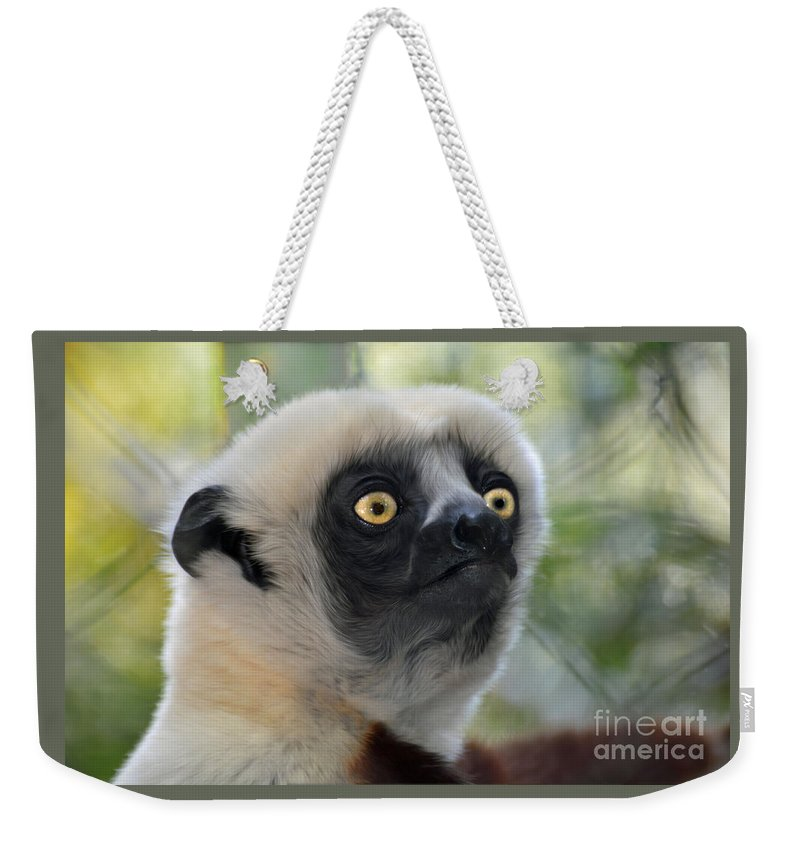 Coquerel's Sifaka Weekender Tote Bag featuring the photograph Coquerel's Sifaka Lemur by Savannah Gibbs