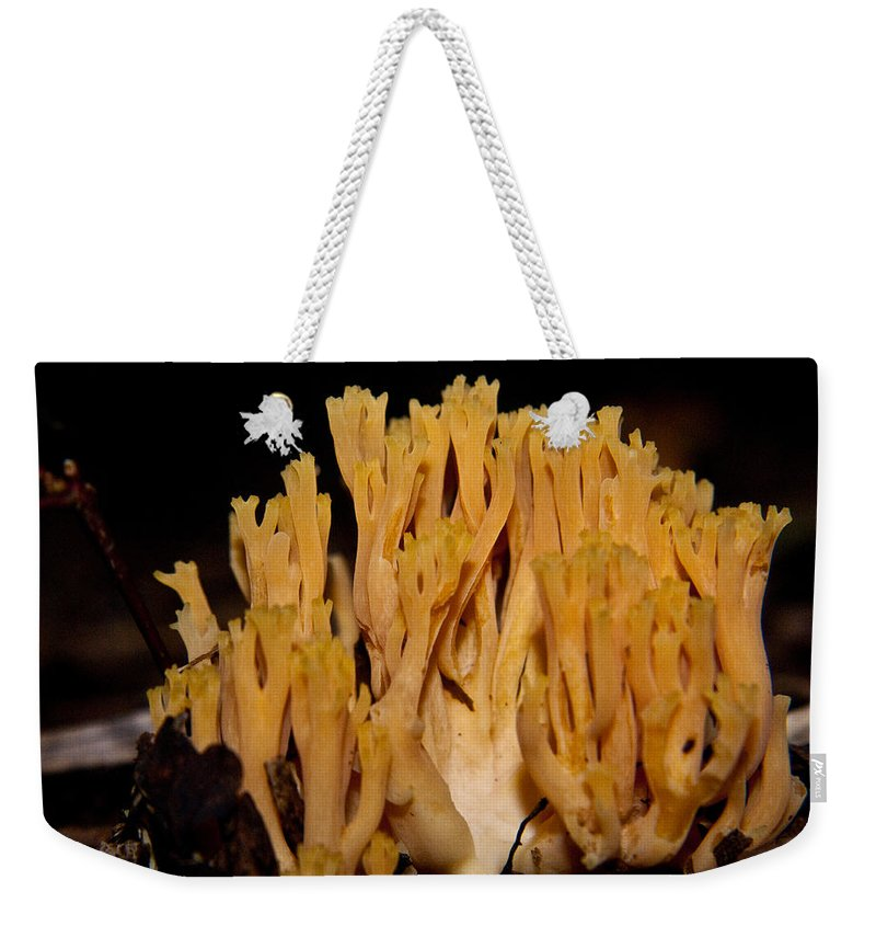 Fungi Weekender Tote Bag featuring the photograph Coral Fungi In The Forest by Douglas Barnett