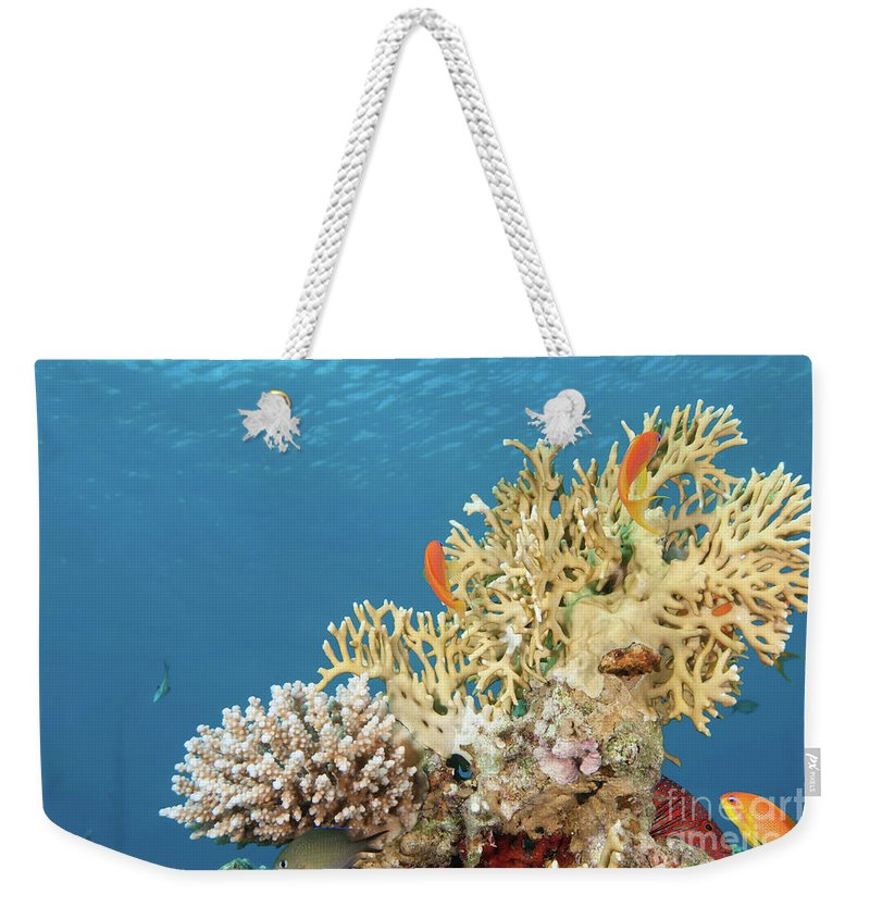 Eco System Weekender Tote Bag featuring the photograph Coral Reef Eco System by Hagai Nativ