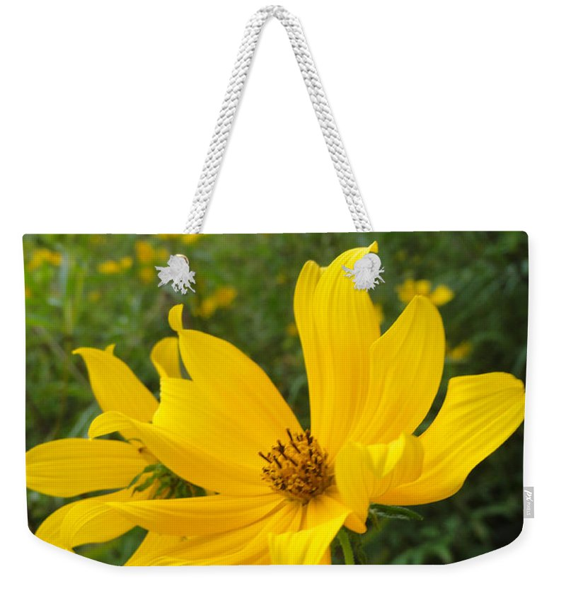 Coreopsis Weekender Tote Bag featuring the photograph Coreopsis by Trish Hale
