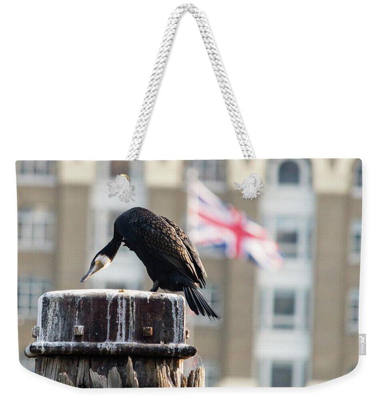 6x4 Weekender Tote Bag featuring the photograph Cormorant Adult Phalacrocorax Carbo by Jacek Wojnarowski