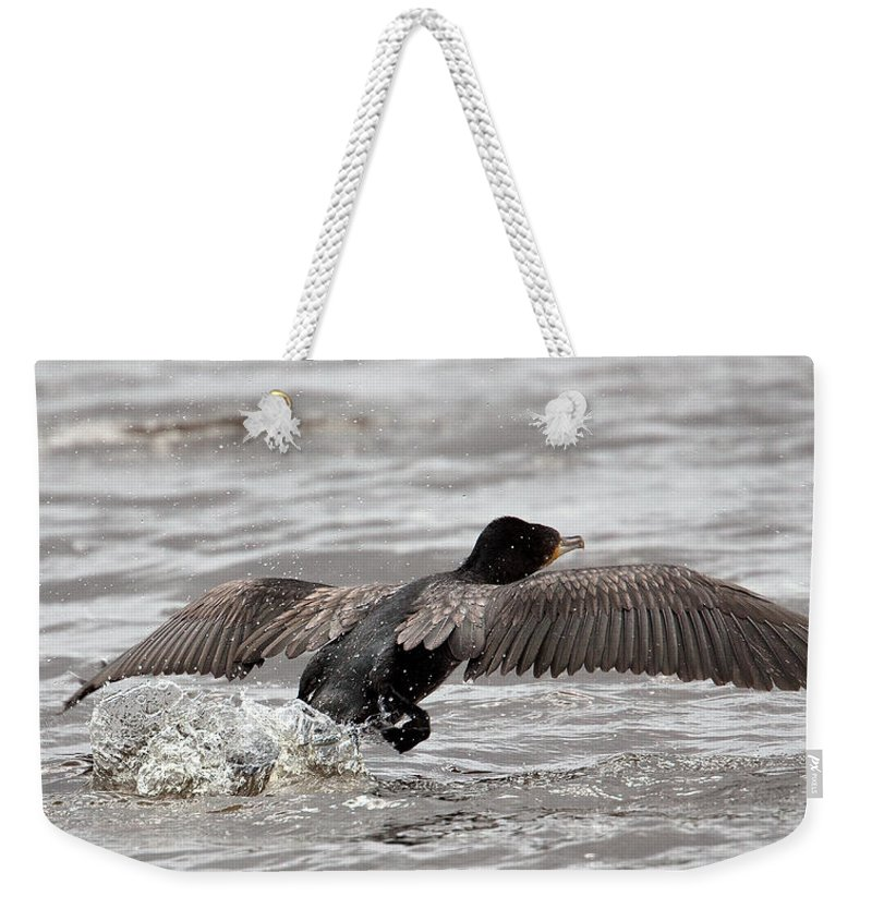 Bird Weekender Tote Bag featuring the photograph Cormorant Taking To The Air by Bob Kemp