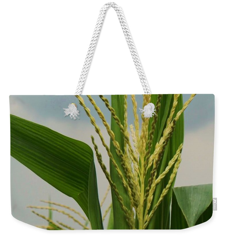 Corn Stalk Weekender Tote Bag featuring the photograph Corn Stalk by Eric Schiabor