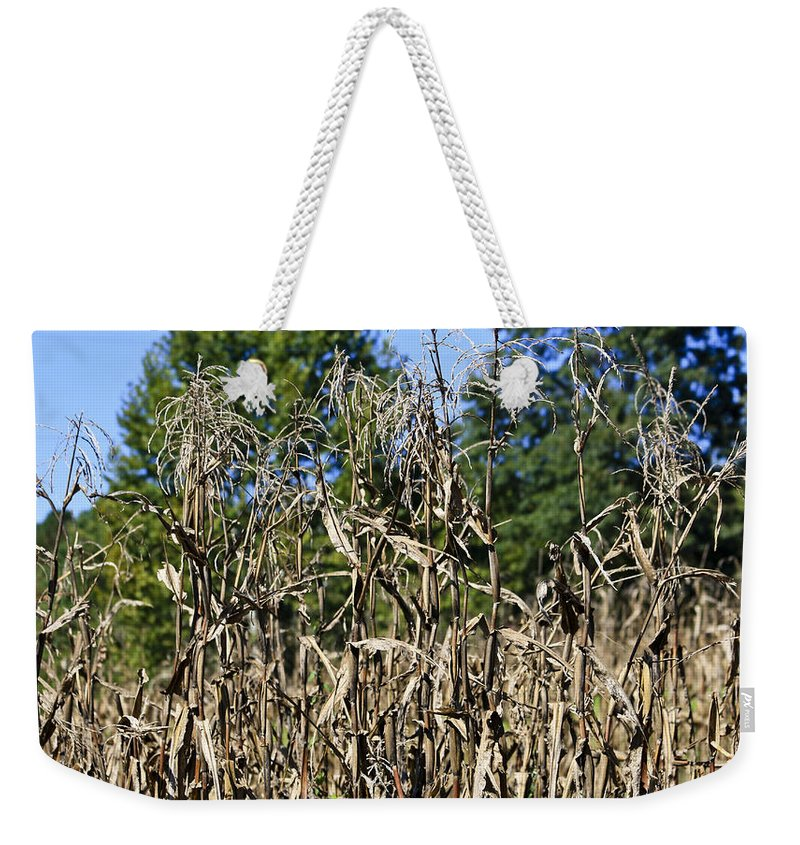 Corn Weekender Tote Bag featuring the photograph Corn Stalks Drying by Teresa Mucha