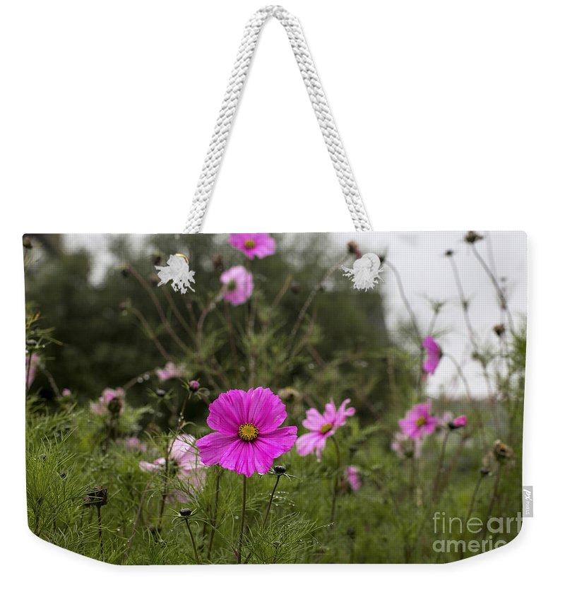 Cosmos Bipinnatus Weekender Tote Bag featuring the photograph Cosmos Flower by Sebastien Coell