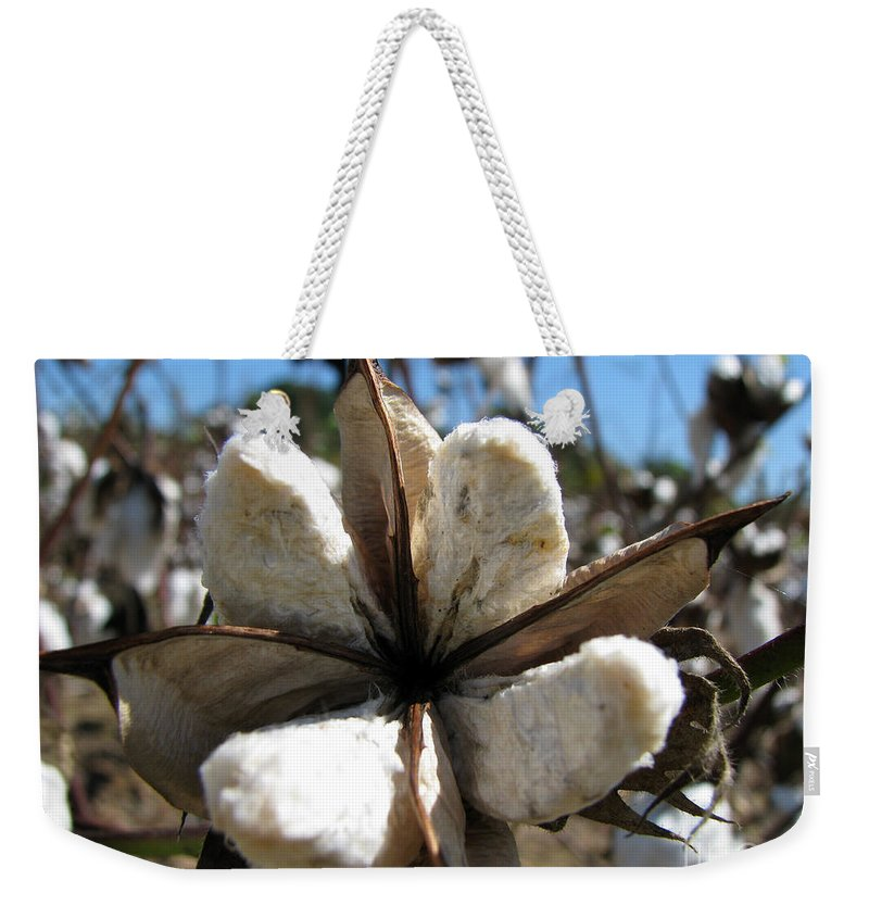 Cotton Weekender Tote Bag featuring the photograph Cotton by Amanda Barcon