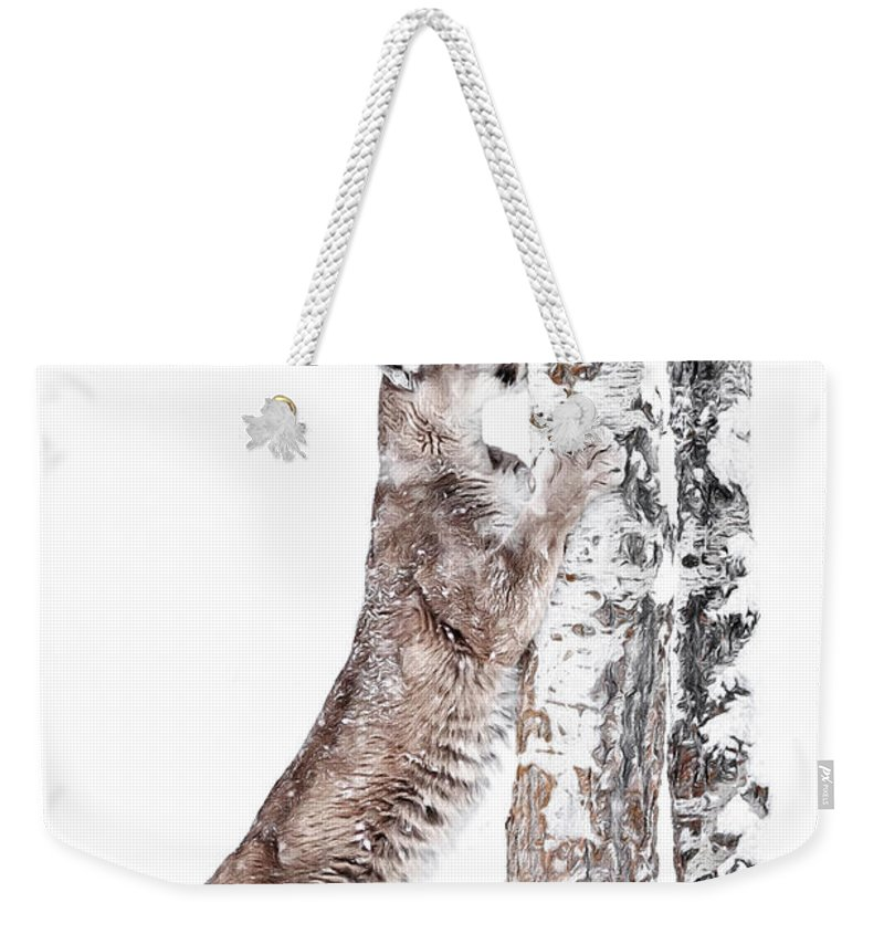 Cougars Tree Weekender Tote Bag featuring the photograph Cougars Tree by Wes and Dotty Weber