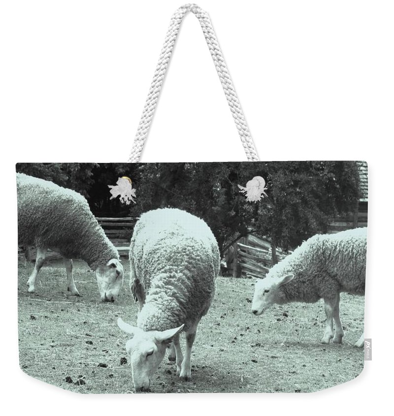 Sheep Weekender Tote Bag featuring the photograph Counting Sheep by Ian MacDonald