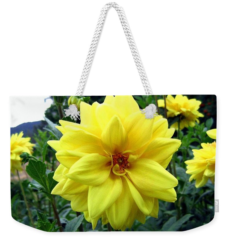 Yellow Dahlias Weekender Tote Bag featuring the photograph Country Dahlias by Will Borden