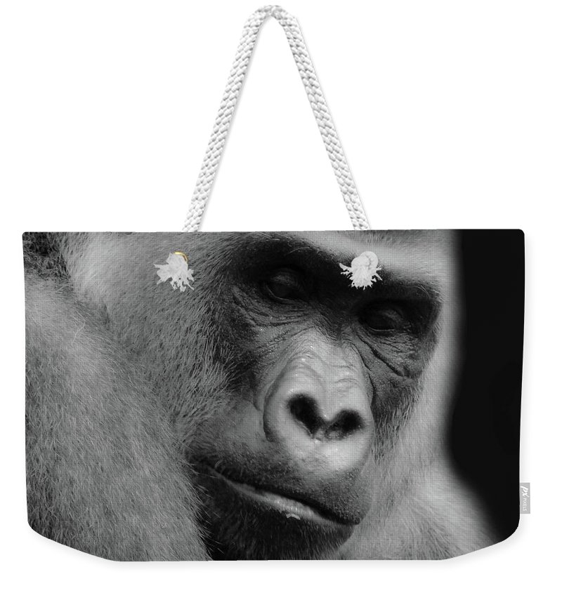 Western Lowland Gorilla Weekender Tote Bag featuring the photograph Cousin Number 14 by Elie Wolf